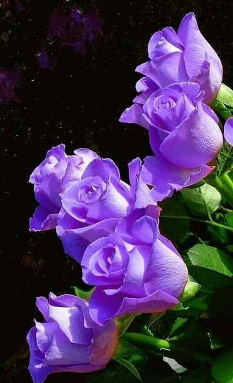 ดอกไม้สวยๆ สีสันดอกไม้ทำให้บรรยากาศบ้านดูมีชีวิตชีวาและน่าอยู่ยิ่งขึ้น